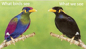 We see a black bird while birds see a purple, green, and blue bird.