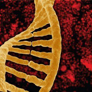 A DNA single strand