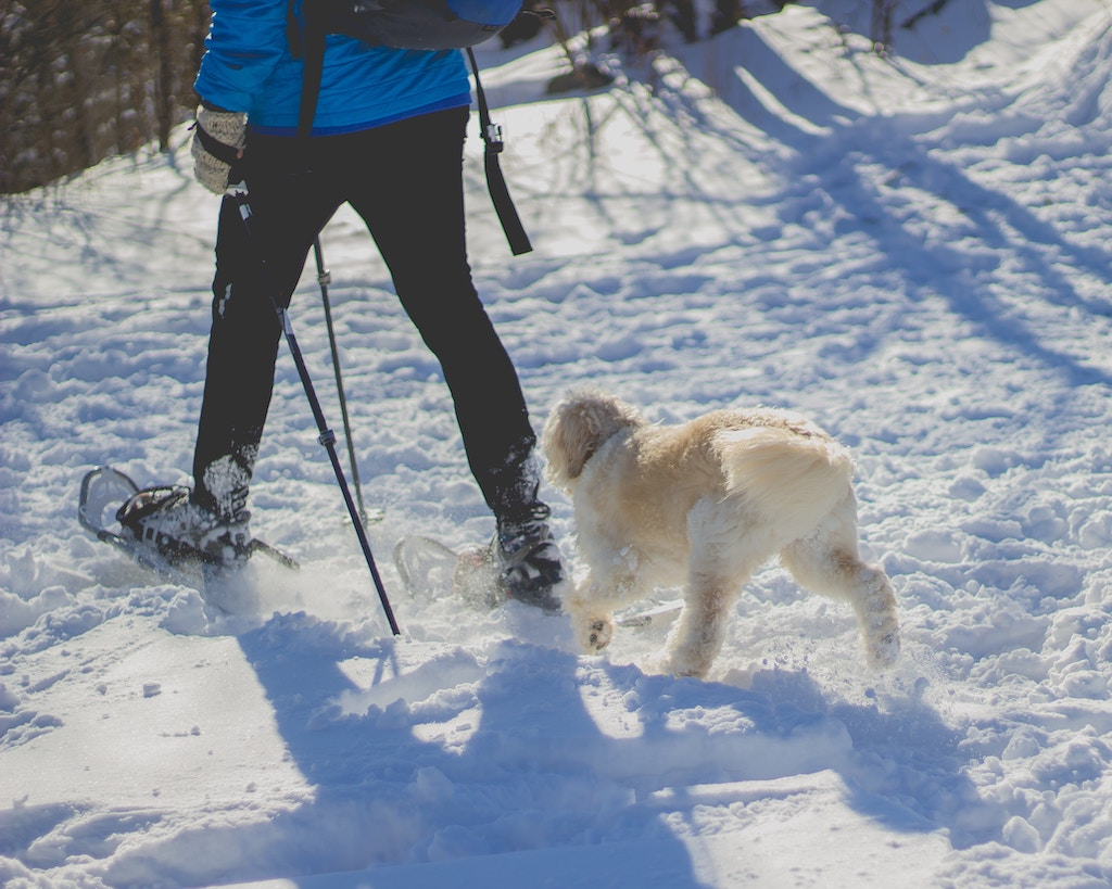 A person walking a dog with a snowy landscape.